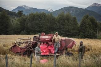 Miguel y su hijo Poli cosechan la avena en los valles de Futaleufú