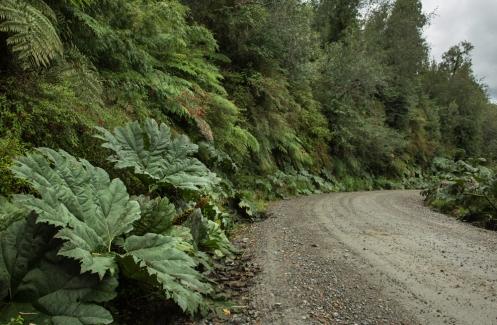 100% Carretera Austral. entre Nalcas y Helechos gigantes me dirijo hacia el pueblo de Puyuhuapi.