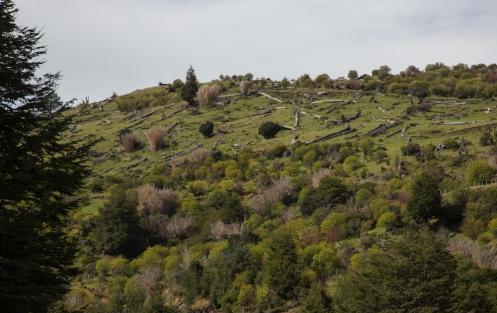 Los incendios de la Patagonia en su mayoría provocados por los primeros colonos marcan claramente el paisaje de estas tierras.