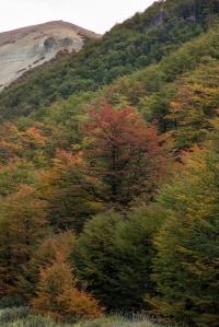 Los arboles comienzan a ponerse los trajes de gala para la fiesta del otoño. Rojo, amarillo, naranja y algunos aun de verde visten las montañas de color en estos dias.
