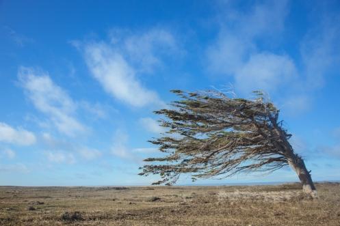 Creo que no hace falta decir nada más acerca del viento.