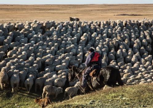 En Tierra del Fuego la mayor parte de la gente vive de las ovejas. Las cosas se hacen como antaño, de la mejor forma.