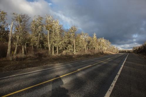 Esta es la luz que continuamente baña el paisaje de Tierra del Fuego durante estos días de invierno. Al fin llegan los árboles.