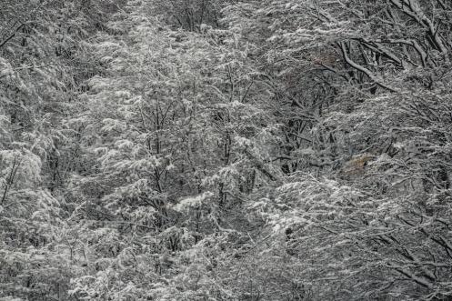 La mágia de la nieve...