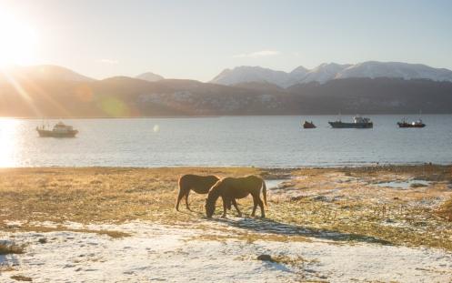 A estas alturas del año el sol se mantiene siempre en el horizonte. Tras salir del colegio de dar un pequeño taller fotográfico paseo por el lado del Canal de Beagle.