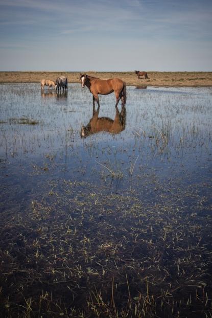 Llegando a la Laguna Rocha  el paisaje nos regala imágenes como esta a lo largo del camino.
