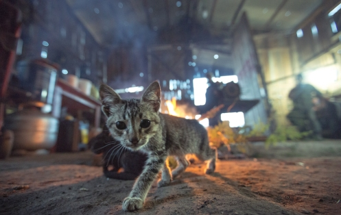 Los gatos al calor del fuego en la borraxaría.