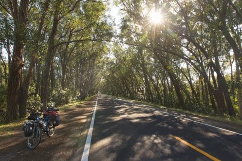 Camino hacia a Cidreira una magnífica sombra hacen más agradables las pedaladas.