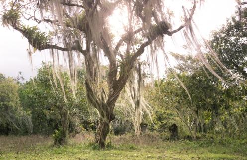 Árboles con mágia en los alrededores de Trindade
