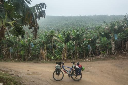 Campos de bananeras. Caminos que solo los hombres del campo conocen.