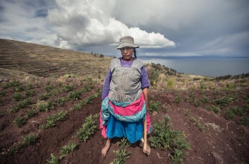 Victoria cultiva descalza su terreno de Patatas sobre el lago Titicaca.