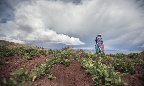 Victoria cultiva su terreno de Patatas sobre el lago Titicaca.