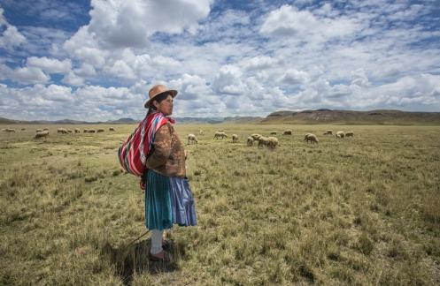 Juana pastorea en la pampa del altiplano peruano sus ovejas.