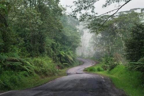 Camino hacia el pueblo de Cacazú. Selva central.