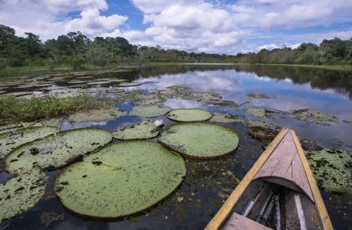La planta de Victoria Regia se puede ver en las lagunas.