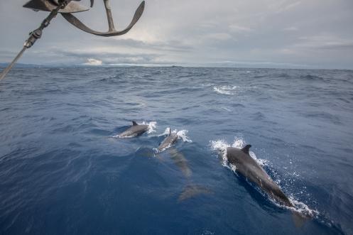 ¡delfines! ¡hay delfines!