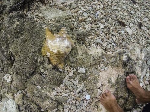 Una caracola fosilizada a las rocas
