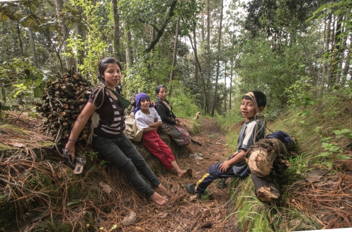 Una familia baja del bosque con leña para su cocina.