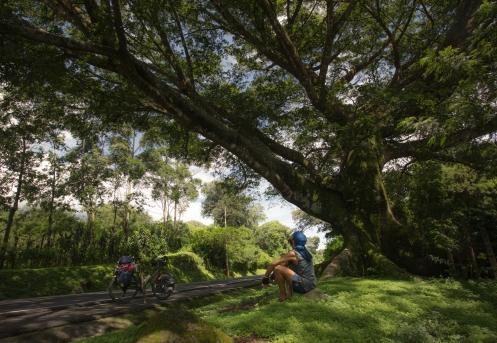 Arboles inmensos a la vera del camino que me obligan a descansar un rato bajo sus ramas.