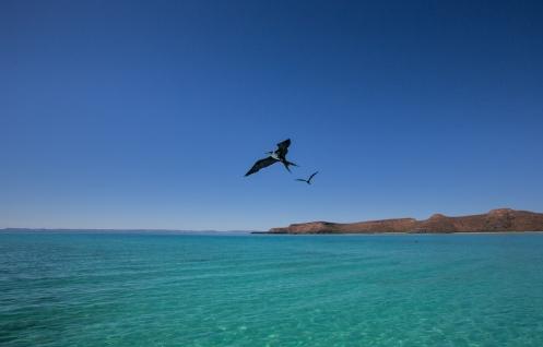 La isla Espiritu Santo es un autentico paraiso escondido en las aguas del Mar de Cortés.