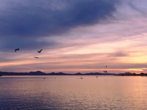 Despertarse con el sonido de los pelícanos pescando es la mejor melodía de despertador que haya tenido jamás. Iphone photo.