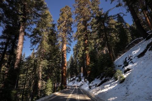 Pedaleando dentro del parque nacional de las sequoias.