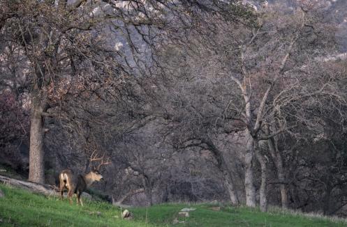 Un ciervo pasta a la vera del camino.