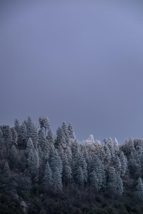 Primera linea de nieve en los bosques.