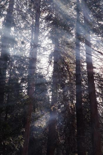 Los primeros rayos de sol atraviesan el  humo que tuesta nuestro pan por la mañana.