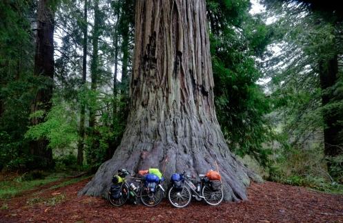 Atravesamos los bosques de redwoods más altos del mundo. Mojados, muy mojados.