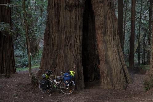Estos árboles son increíbles.