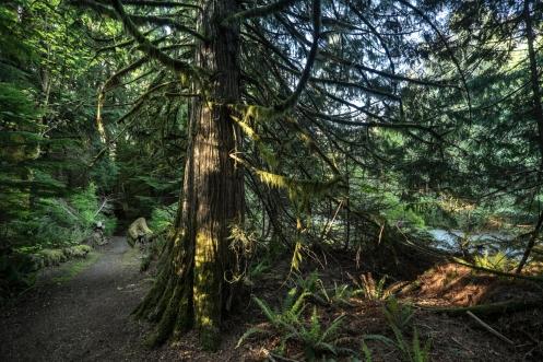 Caminamos por caminos que se desvían de la carretera entre bosques.