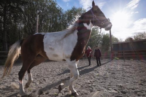 Julie enseña a Bea como amaestrar los caballos