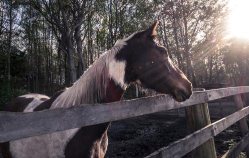 Titán es uno de los caballos que Julie trata con verdadero cariño.